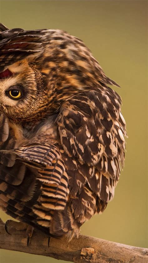 wallpaper national geographic  hd wallpaper owl