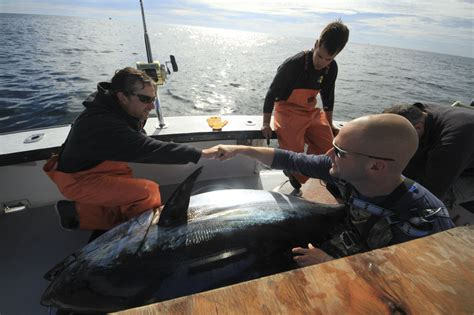 Fv Tuna Boat by Mainers Take To The Water In Tuna The Portland