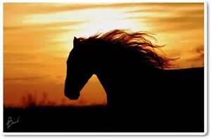 Horse Galloping at Sunset