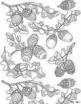 Coloring Fall Acorns Printable Acorn Sheet Skip sketch template