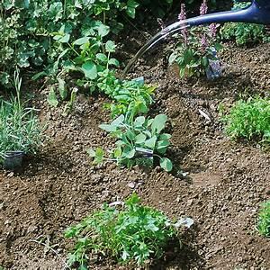 Kräuter Zusammen Pflanzen : kr uter pflanzen shop kr uter als jungpflanzen erwerben kiepenkerl shop pflanzen im haus ~ Whattoseeinmadrid.com Haus und Dekorationen