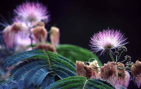 croatian flowers viewing album croatia flowers
