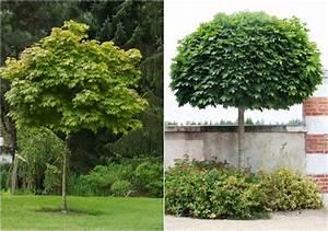 Kleine Bäume Für Garten : b ume f r kleine g rten ideen f r kleinw chsige sorten ~ A.2002-acura-tl-radio.info Haus und Dekorationen