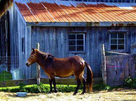 horse barn near wallpapers
