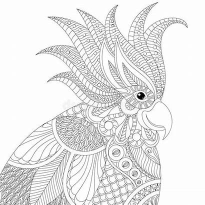 Adult Exotic Cockatoo Parrot Coloring Pages Tropical