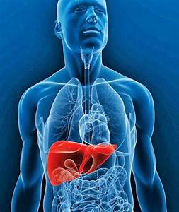 Средства для повышения потенции и лечения простатита