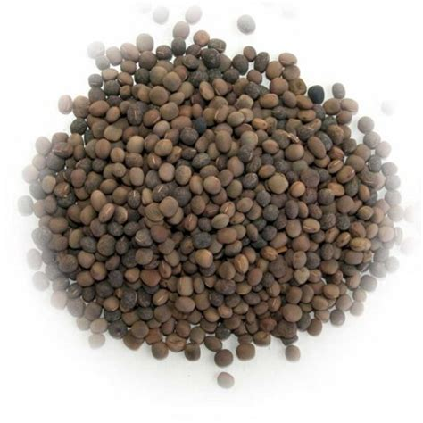 vetch seed kg enfield produce