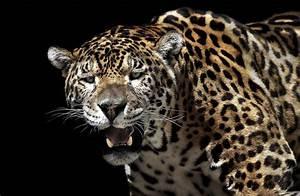 Jaguar HD Wallpaper   Background Image   2048x1338   ID ...