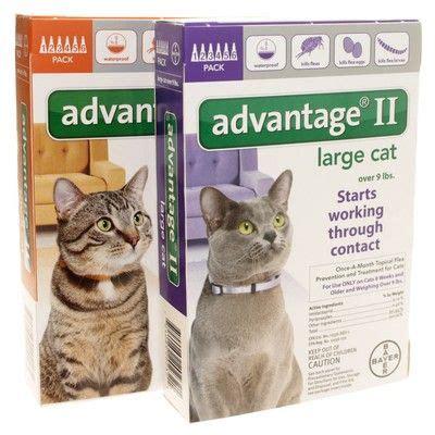 flea and tick for cats advantage ii for cats flea prevention vetrxdirect
