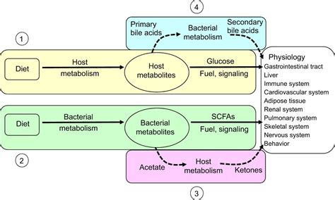 place  hostmicrobe symbiosis   comparative
