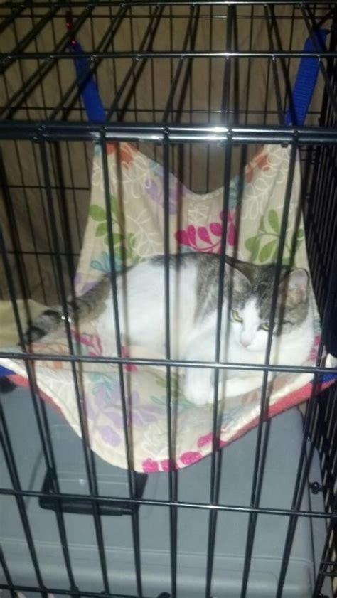 Cat In Hammock by Hammocks For Cats Cat Hammocks Pethelpful