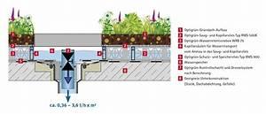 Extensive Dachbegrünung Aufbau : 200415 retetionsdach drossel dachbegr nung von optigr n der spezialist f r gr ndach ~ Whattoseeinmadrid.com Haus und Dekorationen