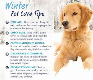 winter pet care tips arborist enterprises With winter dog care