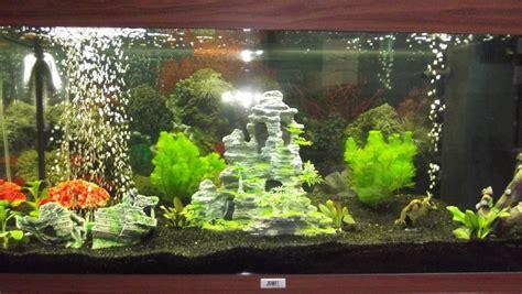 crabe aquarium eau douce aquarium pour crabe eau douce lancement d un aqua eau douce aquarium site d aquariophilie