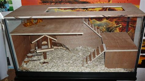 besoin de conseil gerbilles forum animaux cochon d inde hamster souris aufeminin