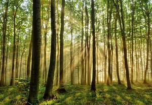 NPI 7216 Wald Fototapete Tapeto