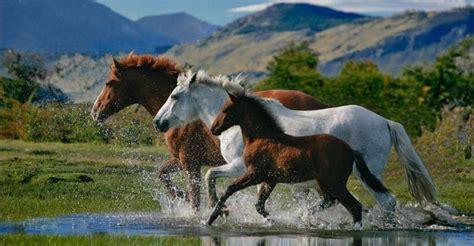 schoene pferde hintergrundbilder fuer whatsapp bilder und
