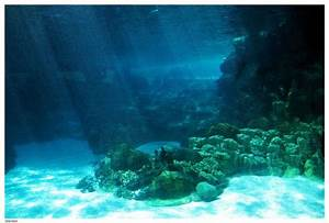Ocean Biome Google Search Biomes Pinterest Search