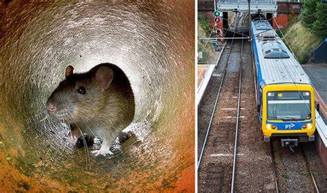 siege habitat 39 rat plague 39 hits australia melbourne siege after