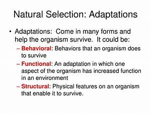 PPT - The Theory of Evolution PowerPoint Presentation - ID ...