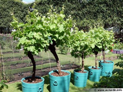 cuisiner avec les fleurs cultiver la vigne en pot
