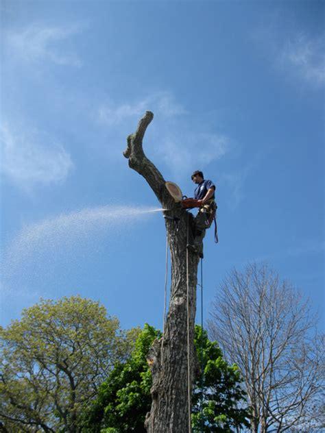 Tree Removal On Cape Cod  Mason Tree Service