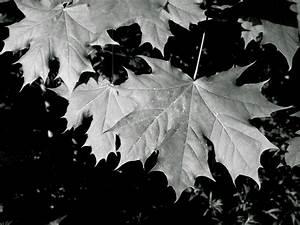 Herbst Schwarz Weiß : kostenlose foto baum natur wald ast schwarz und wei holz blatt blume gr n nat rlich ~ Orissabook.com Haus und Dekorationen