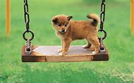Cute Dogs and Puppies On a Swing