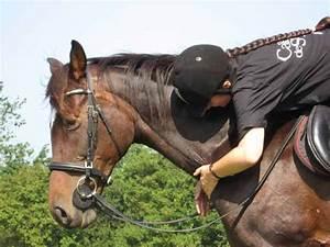 Combien De Chevaux : combien de chevaux avezvous 2 forum cheval ~ Medecine-chirurgie-esthetiques.com Avis de Voitures