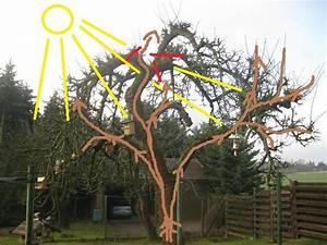 Apfelbaum Schneiden Sommer : fragen zu sehr alten apfelb umen mein sch ner garten forum ~ Lizthompson.info Haus und Dekorationen