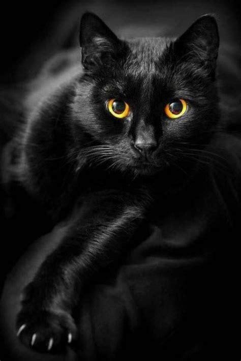 17 Best Ideas About Black Cats On Pinterest Black