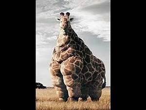WORLD'S FATTEST ANIMAL - YouTube