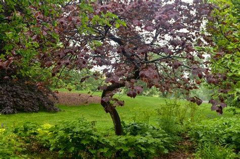 small trees for the garden best trees for the small garden upcoming events wave hill new york public garden and