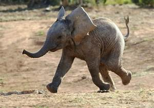 15 Little Known Facts About Elephants
