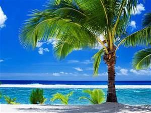Bilder Von Palmen : foto palmenstrand fotonummer 460006 von erlebnisreisen sigl ~ Frokenaadalensverden.com Haus und Dekorationen