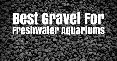 gravel  freshwater aquariums