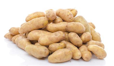 cuisiner la ratte pomme de terre ratte du touquet la vie grande