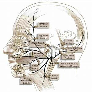 Facialparalysisinstitute Com  Images  Stories