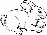 Rabbit Coloring Pages Bunny Animals Sheet Drawing Animal Drawings Template sketch template