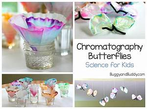 science for chromatography butterfly craft