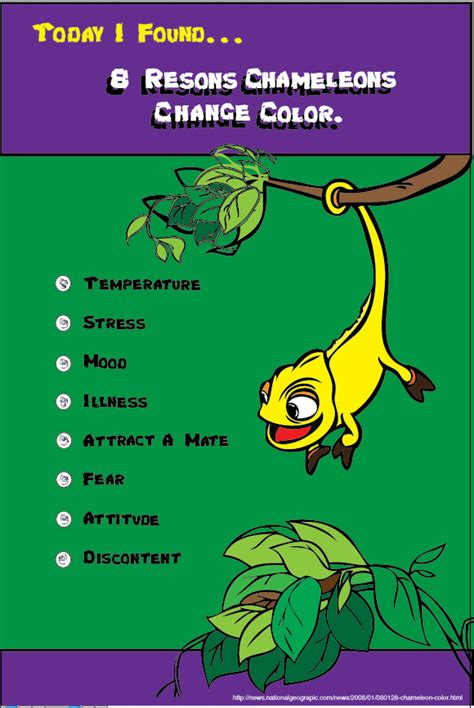 do change color why do chameleons change color on aiga member gallery