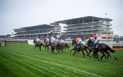 cheltenham festival horse novice hurdlers rated racing popular most