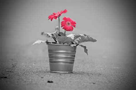 images nature black  white plant leaf flower
