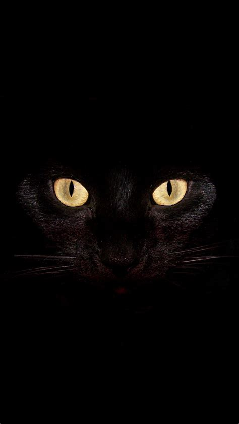 Background Home Screen Wallpaper Cat by Black Cat Best Htc One Wallpapers Free And Easy To