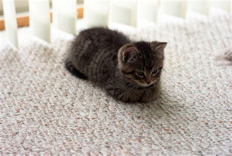 cat loaf  tumblr