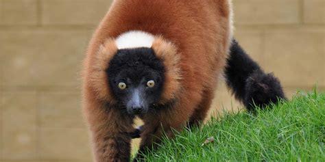 amazon park zoo wight isle prices