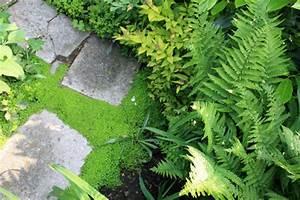 Plante Pour Jardin Japonais : plantes couvre sol 7 id es pour oublier le gazon petit ~ Dode.kayakingforconservation.com Idées de Décoration
