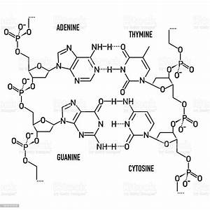 Dna Molecule Structure Stock Illustration