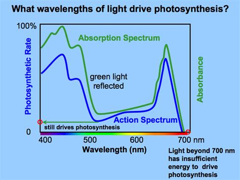 What Is The Difference Between The Action And Absorption