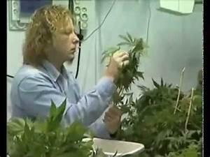 Culture indoor Cannabis Fabrication d'une chambre de